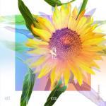 Tải bài hát mới [Re:flower] PROJECT #5 (Single) hot