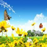 Nghe nhạc Những Bông Hoa Những Bài Ca mới