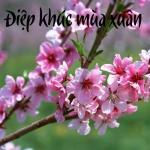 Tải bài hát Mp3 Điệp Khúc Mùa Xuân chất lượng cao