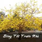 Download nhạc hot Bông Tết Trước Nhà online