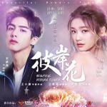 Download nhạc mới Hoa Bỉ Ngạn OST online