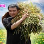 Download nhạc hot Khúc Hát Dâng Hoa về điện thoại