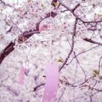 Nghe nhạc mới Hoa Anh Đào (樱) (EDM Remix) miễn phí