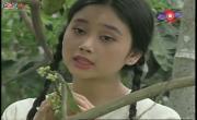 Xem video nhạc Bông Bưởi Hoa Cau online