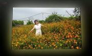 Tải video nhạc Thương ca tiếng Việt - Xuân Hoa mới